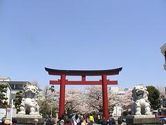 torii of tsuruoka hatiman-gu