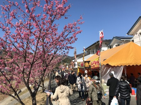 cherry blossoms and open-air stalls in Kawazu Town