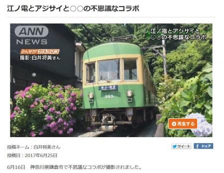 ANN News Enoden line and hydrangea