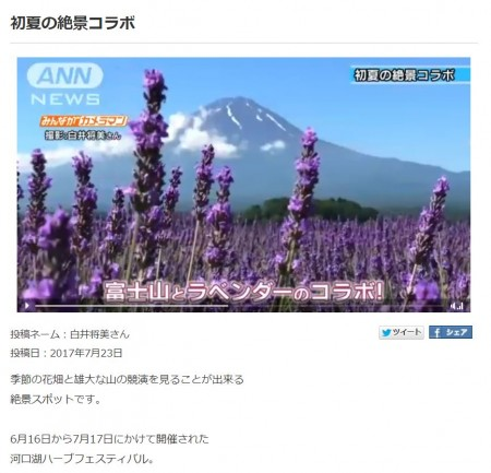 ANN News Mt.Fuji and lavender
