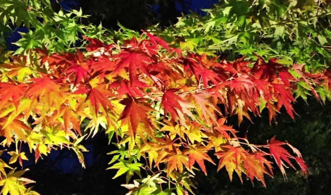 Light up of autumn leaves in Hase temple