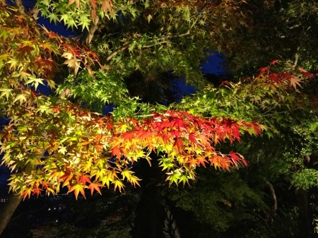 Autumun leaves in Hase temple in Japan