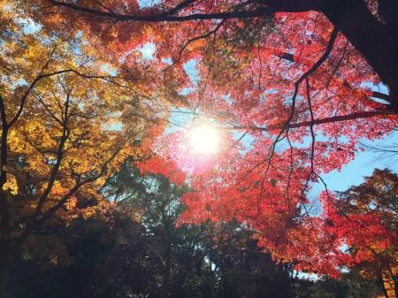 Ninomaru section in Kokyo Higashi Gyoen Garden (Imperial Palace East Garden)