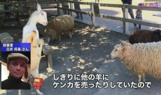 NHK Tokudane Toko Doga