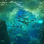 Enoshima Aquarium in Japan