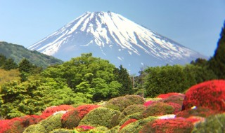 Azalea nad Mt.Fuji in Hakone