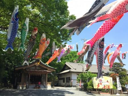 Carp streamers in Shirahata shrine