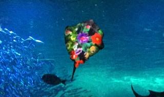 Night Wonder Aquarium 2015