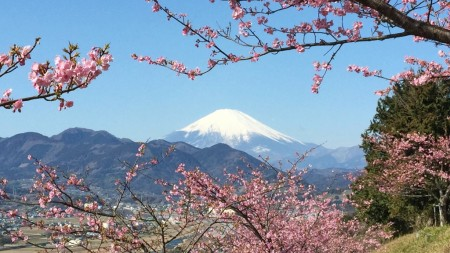Cherry blossom and Mt.Fuji