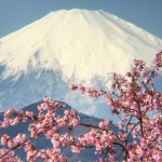 Cherry blossom and Mt.Fuji