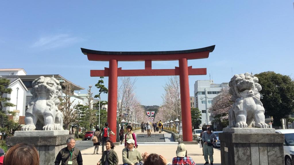 Cherry blossoms in Tsurugaoka Hachimangu 樱花在鹤冈八幡