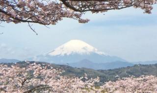 Cherry blossoms in Azumayama park