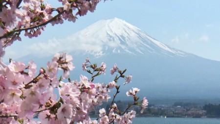 Cherry Blossoms of Nagasaki Park at the lake Kawaguchiko