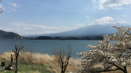 Cherry Blossoms of Nagasaki Park at the lake Kawaguchiko