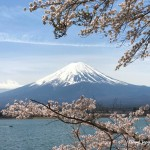cherry blossoms & Mt.Fuji at Nagasaki park