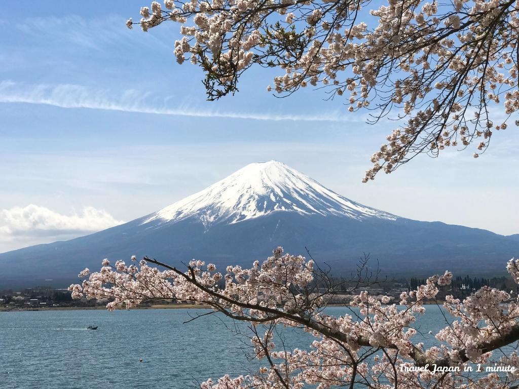 Cherry blossoms in lake Kawaguchiko
