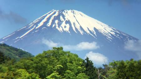 Fully bloomed azalea & Mt.Fuji