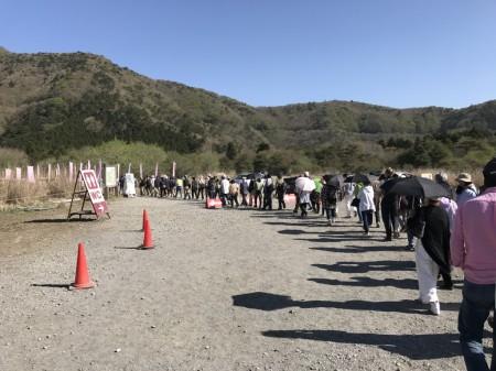 Line at the entrance of Fuji Shibazakura festival