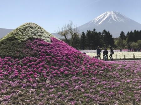 Little mount Fuji in Fuji Shibazakura festival