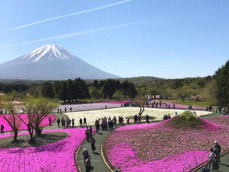 The view from observatory in Fuji Shibazakura festival