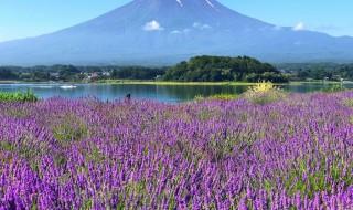 Kawaguchiko herb festival