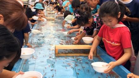 World's longest goldfish scooping in Japan