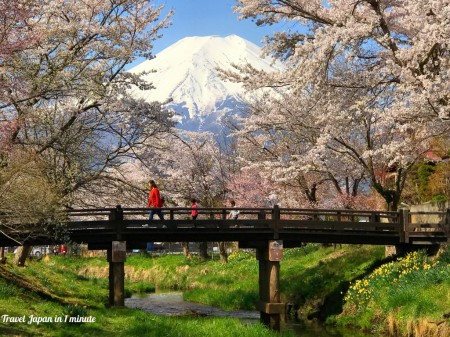 Cherry blossoms and Mt.Fuji at Sin-Nashogawa river in Oshino Hakkai