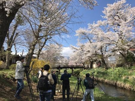 Cherry blossoms and Mt.Fuji at Sin-Nashogawa river in Oshino Hakkai