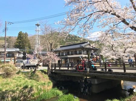 Cherry blossoms at Omiyabashi bridge in Oshino Hakkai