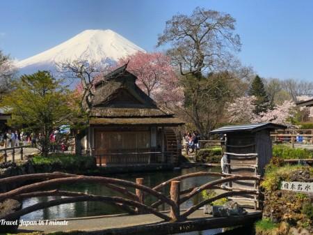 Cherry blossoms and Mt.Fuji at Oshino Hakkai