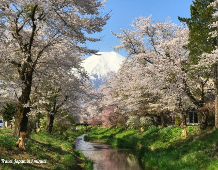 Cherry blossoms and Mt.Fuji at Omiyabashi bridge in Oshino Hakkai