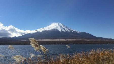 Japanese silver glass and Mount Fuji at Nagaike Shinsui Park in lake Yamanaka