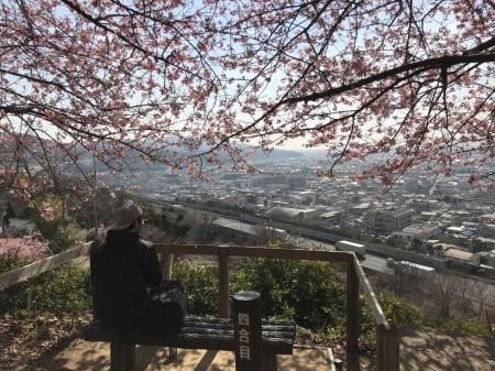 Matsuda Cherry Blossom Festival 2018