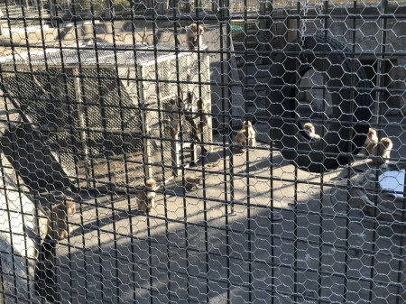 zoo in Hiroyama park in Zushi