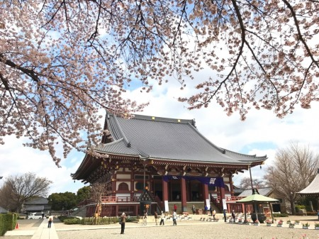 Daido and cherry blossoms in  Ikegami Honmonji temple