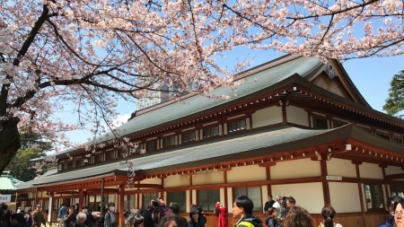 Cherry blossoms at Sanshuden in Yasukuni shrine
