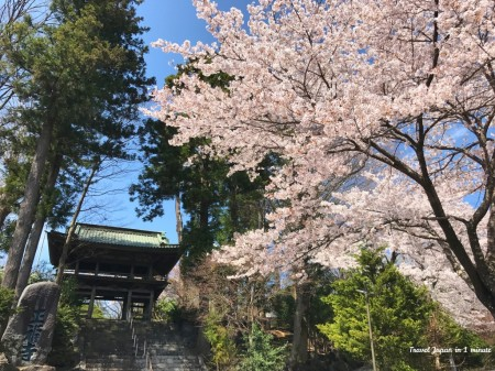 Cherry blossoms at Shohukuji temple Chureito pagoda at near Arakurayama Sengen Park