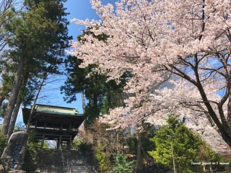 Cherry blossoms at Shohukuji temple Chureito pagoda at near Arakurayama Sengen Park