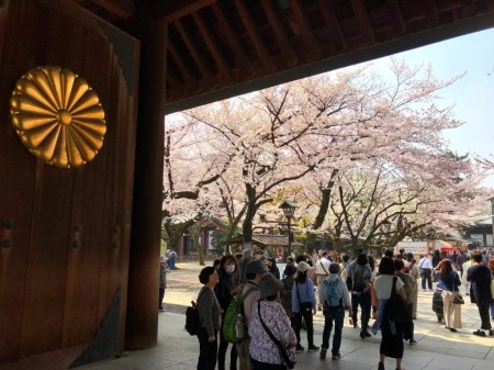 Cherry blossoms at Shinmon in Yasukuni shrine