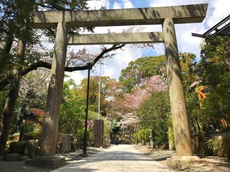 Torii and cherry blossoms in Hotoku Ninomiya Shrine