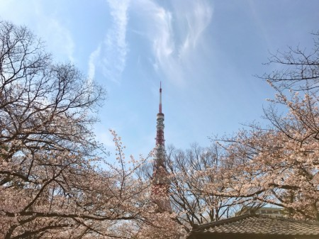 Cherry blossoms in Zojoji temple and Tokyo tower
