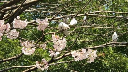 Dove cote in Yasukuni shrine