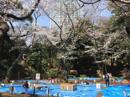 Set their spot for hanami at Shiba Maruyama Kofun in Shiba koen park