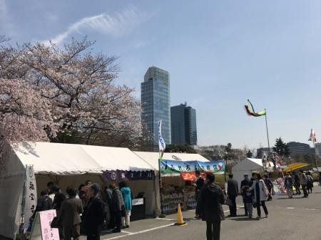 Cherry blossoms and food stalls at Zojoji temple in Tokyo