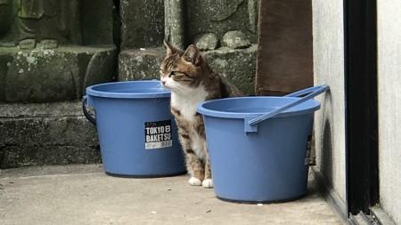 Cat at Komyoji temple in Kamakura