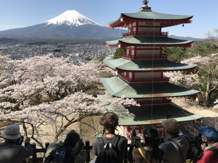 Cherry blossom,Mt.Fuji and Chureito pagoda Arakurayama Sengen Park