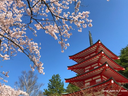 Chureito pagoda and cherry blossoms at Arakurayama Sengen Park