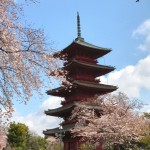 Cherry blossoms and five-story pagoda at Ikegami Honmonji temple