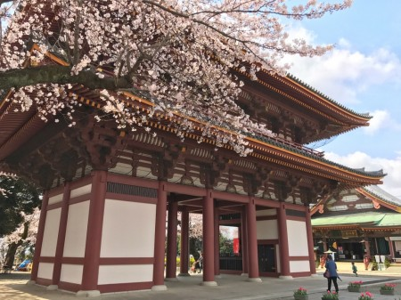 Nio-mon and Cherry blossoms in Ikegami Honmonji  temple
