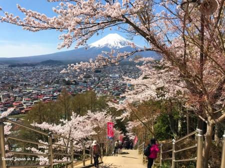 Cherry blossoms,Mt.Fuji at Arakurayama Sengen Park